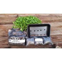 Sunflower Sprout Kit